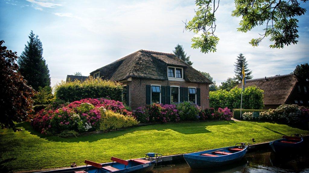 Domowy ogród