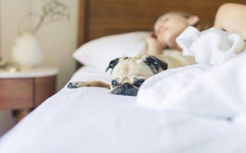 Zwierzęta w domu – za i przeciw