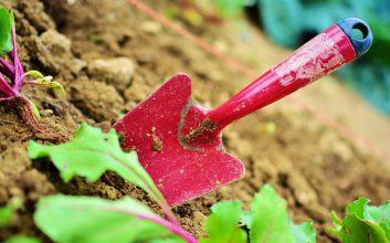 Profesjonalne ogrodnicze usługi- na czym polega praca ogrodników?